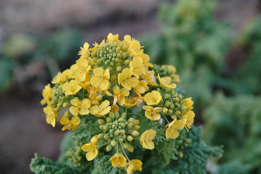 2月2日、初春のゆいの花公園_c0223825_041454.jpg