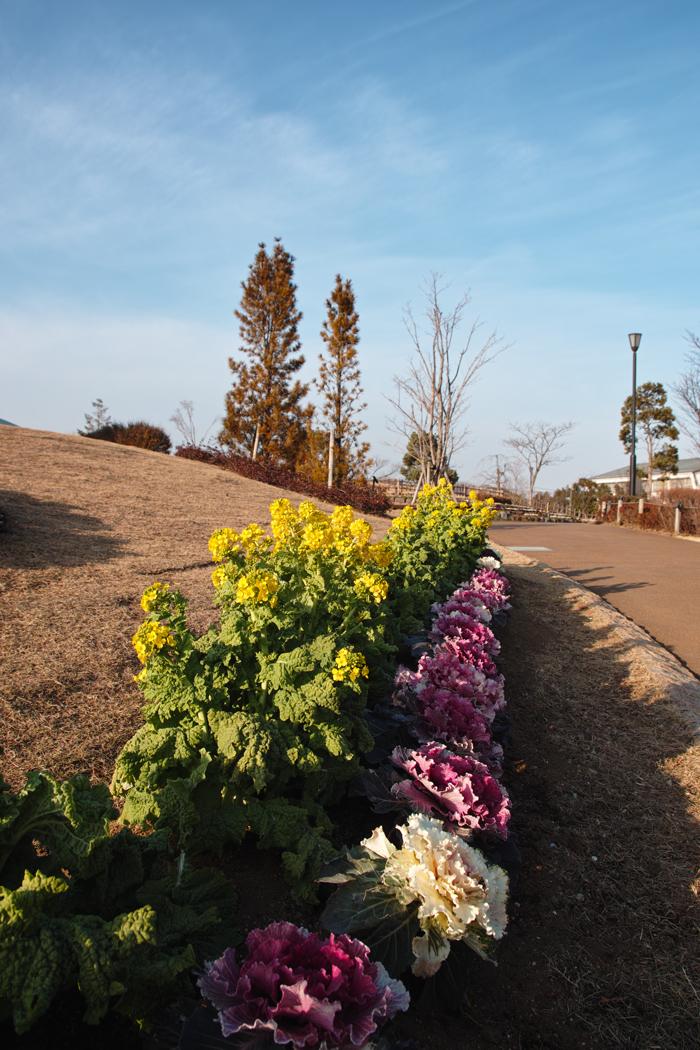 ゆいの花公園の梅が開花。_c0223825_2135519.jpg