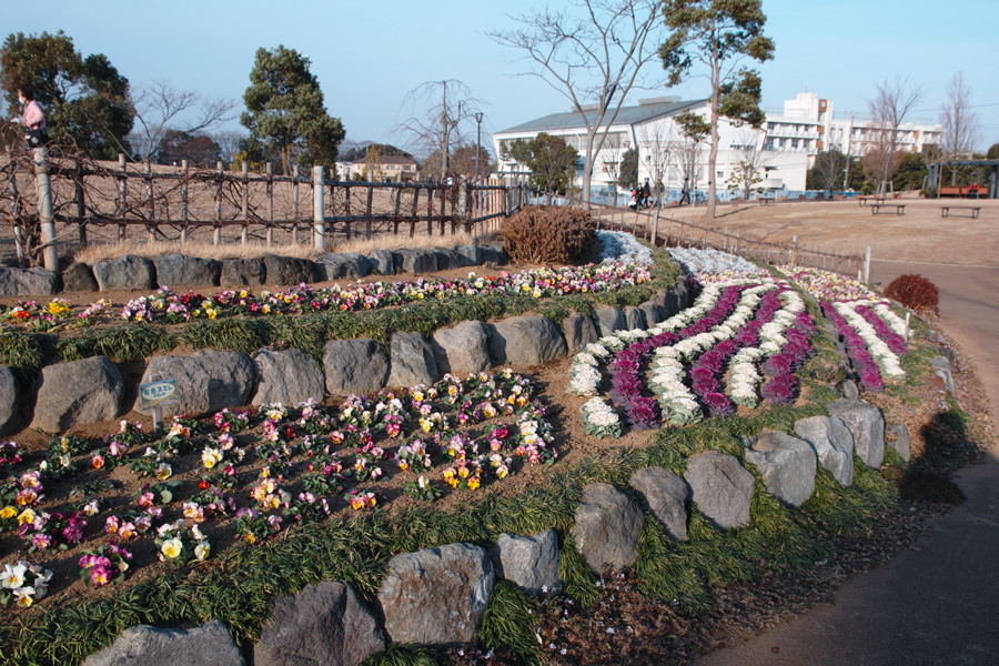 ゆいの花公園の梅が開花。_c0223825_21371799.jpg