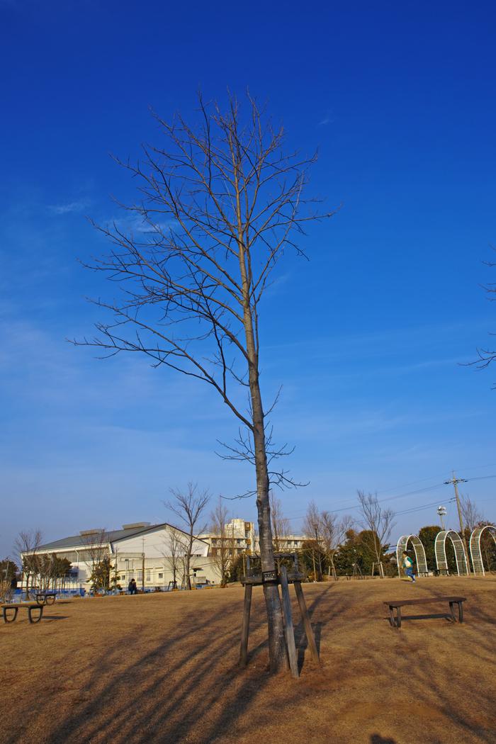 ゆいの花公園の梅が開花。_c0223825_21441067.jpg