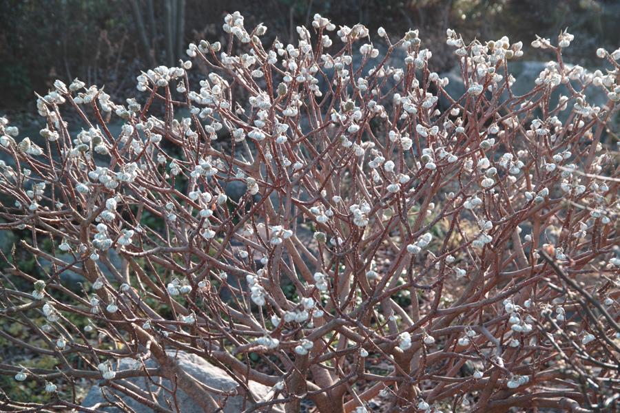 ゆいの花公園の梅が開花。_c0223825_21462029.jpg