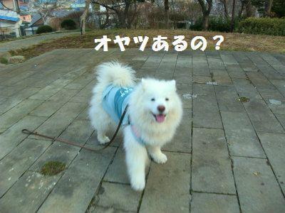 d0033151_10424671.jpg