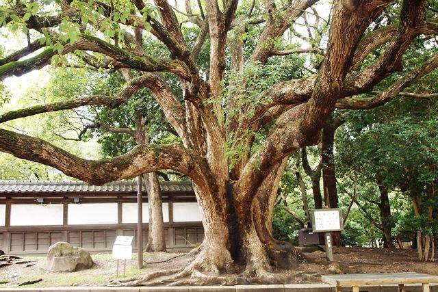 須磨離宮公園_b0227552_20361853.jpg