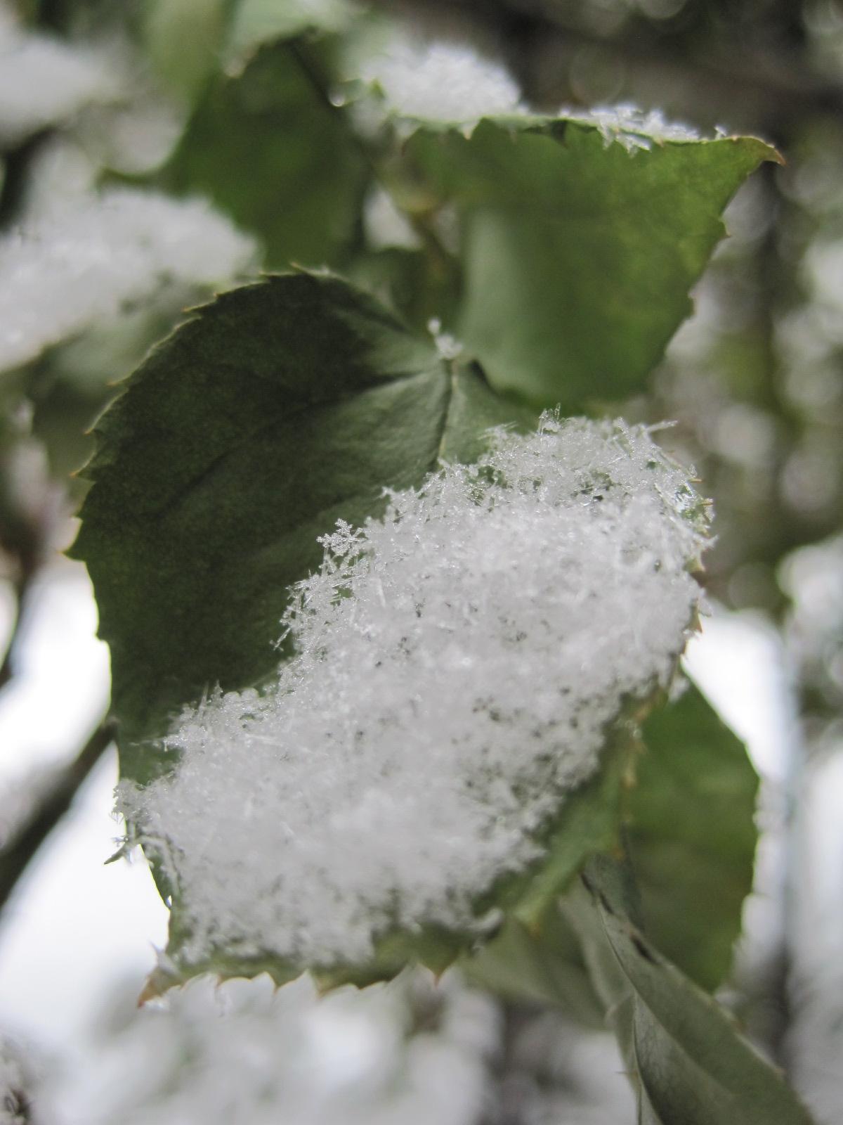 *雪の結晶*_f0236260_23261759.jpg