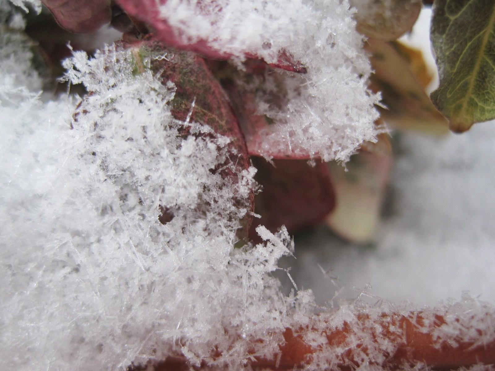 *雪の結晶*_f0236260_23275518.jpg