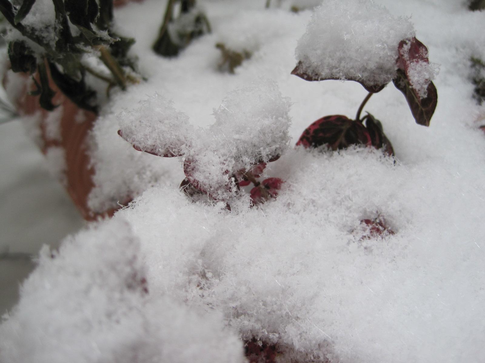 *雪の結晶*_f0236260_232779.jpg