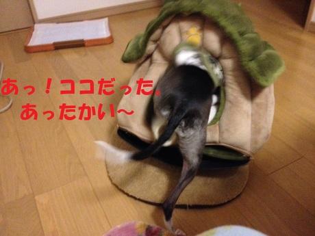 f0223972_826319.jpg