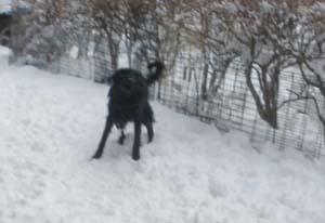 雪遊び〜 Part2_b0084194_1503011.jpg