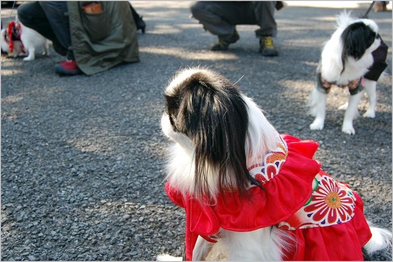 芝増上寺2013年節分追儺式[弐]_a0155999_22184338.jpg