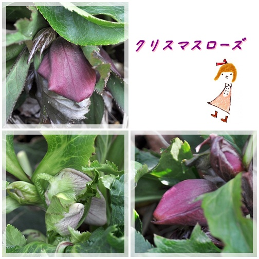 f0176499_1432975.jpg
