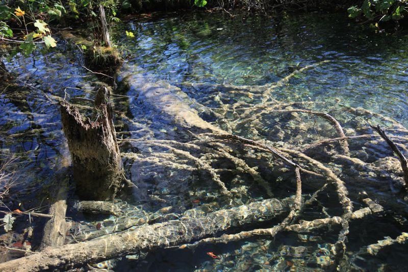 クロアチア(秋のプリトヴィツェ湖群国立公園)_d0148902_10102231.jpg