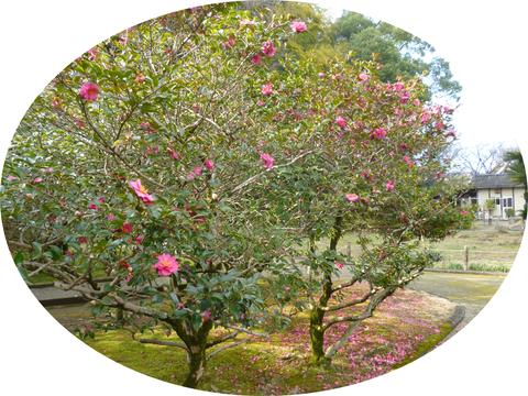 北岡自然公園♪_b0228113_14424273.png