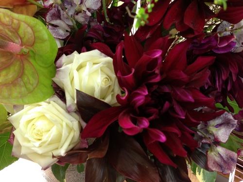 今週のお花とセール情報_a0200423_19265839.jpg