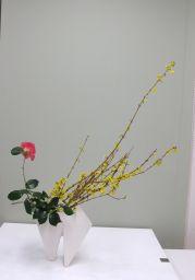 春のはじまりを告げる花_c0165824_22204756.jpg