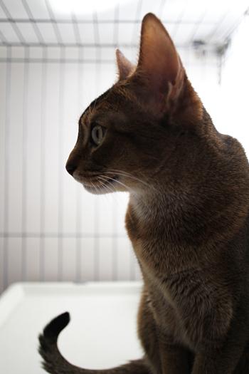 [猫的]シニア_e0090124_045489.jpg