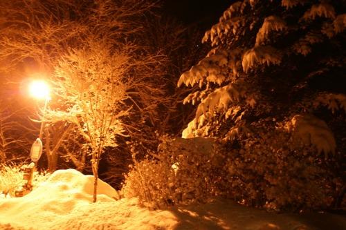 夜に輝きだす木々_b0174425_1903161.jpg