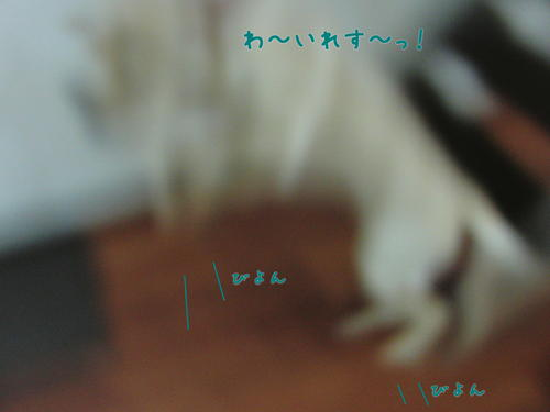 f0189870_14584013.jpg