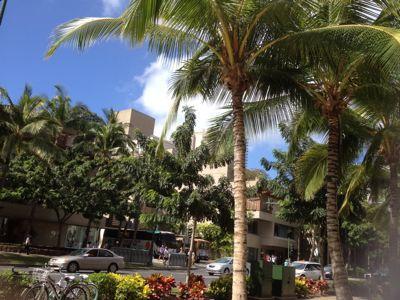 ハワイより_d0256587_4343716.jpg