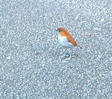 野鳥とおべんとう_a0247891_10564166.jpg