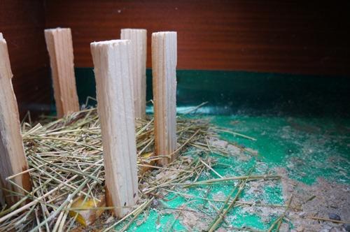 ウサギの一軒家_f0106597_0235048.jpg