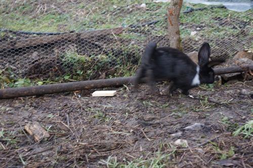 ウサギの一軒家_f0106597_0275647.jpg