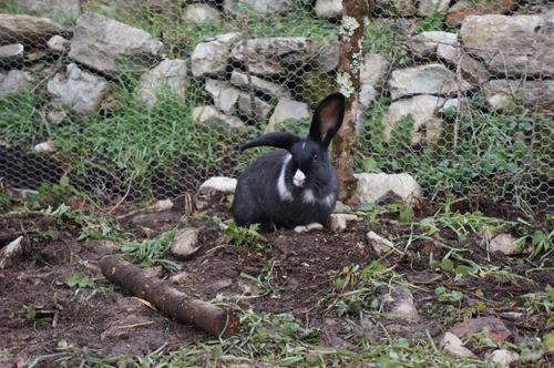 ウサギの一軒家_f0106597_0292495.jpg