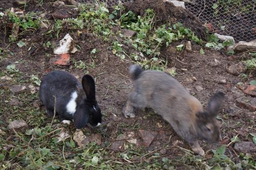 ウサギの一軒家_f0106597_0303254.jpg