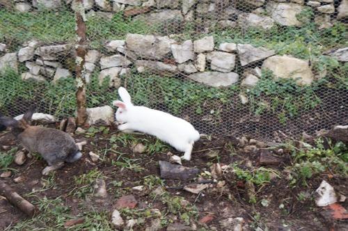 ウサギの一軒家_f0106597_0451567.jpg