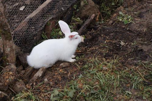 ウサギの一軒家_f0106597_0454711.jpg
