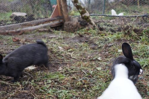 ウサギの一軒家_f0106597_0462914.jpg