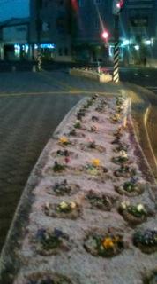 【広島県、南部も小雪】_e0094315_7425010.jpg