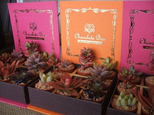 チョコレートボックス_b0239952_21371865.jpg