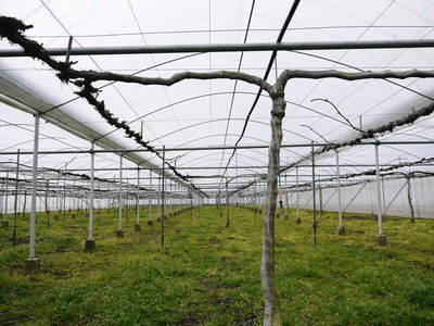 熊本ぶどう 社方園 ハウス張りと熊本農業高校からの農業実習_a0254656_18211154.jpg