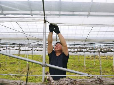 熊本ぶどう 社方園 ハウス張りと熊本農業高校からの農業実習_a0254656_19102324.jpg