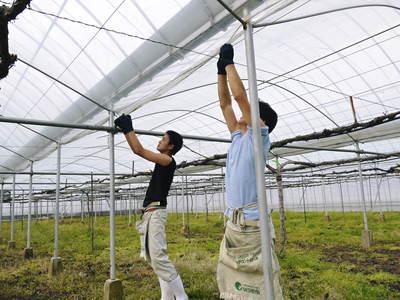 熊本ぶどう 社方園 ハウス張りと熊本農業高校からの農業実習_a0254656_19142451.jpg