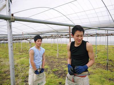 熊本ぶどう 社方園 ハウス張りと熊本農業高校からの農業実習_a0254656_19183611.jpg