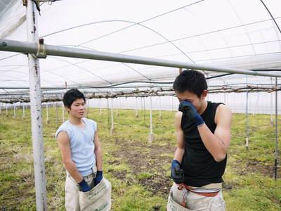 熊本ぶどう 社方園 ハウス張りと熊本農業高校からの農業実習_a0254656_19263494.jpg