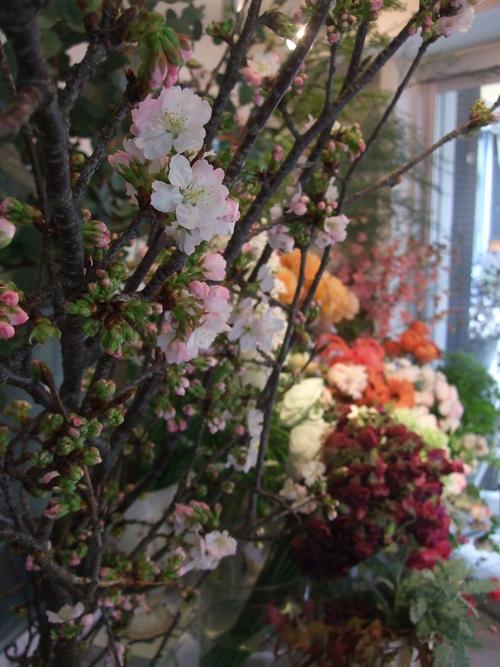 オークリーフ(黒い八重のクリスマスローズと、安行桜)_f0049672_17492135.jpg