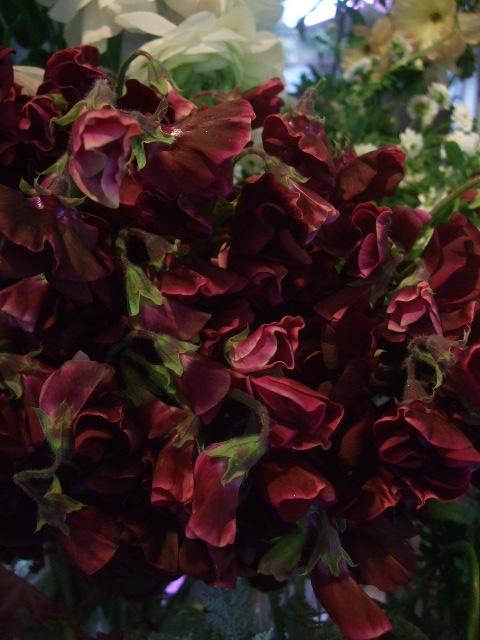 オークリーフ(黒い八重のクリスマスローズと、安行桜)_f0049672_17595966.jpg
