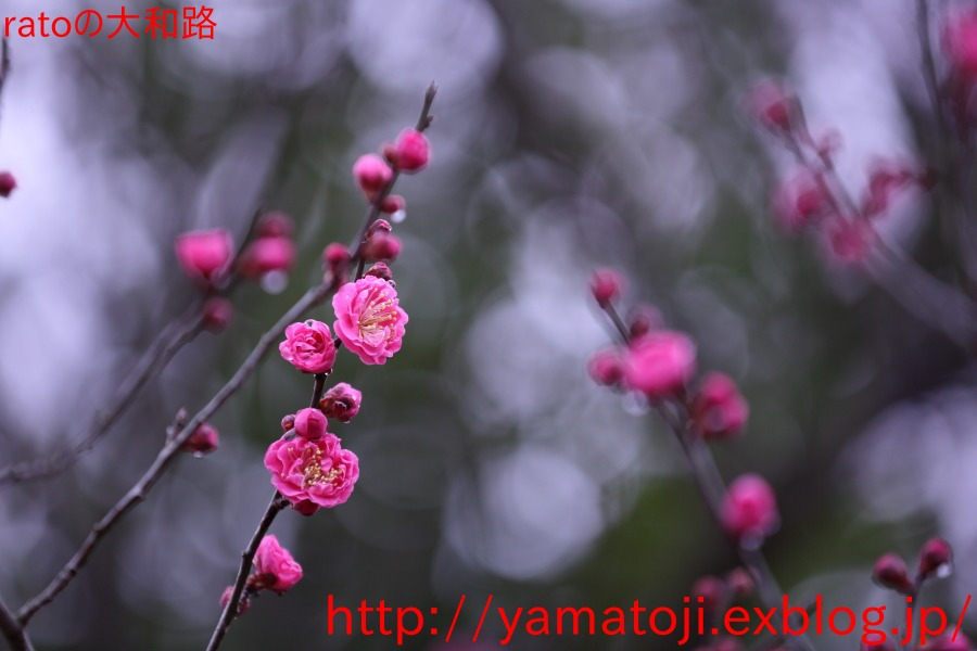 f0236776_22101056.jpg