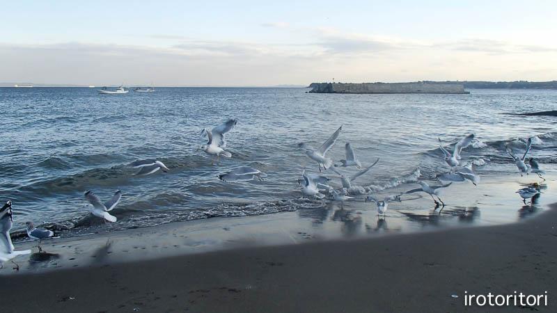 海です!!  (セグロカモメ?)  2013/02/08_d0146592_23511675.jpg