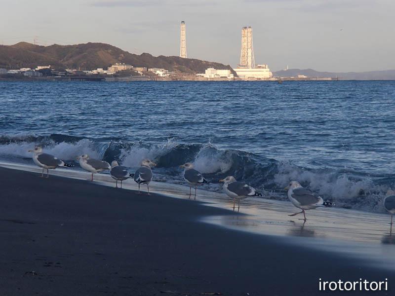 海です!!  (セグロカモメ?)  2013/02/08_d0146592_23512593.jpg