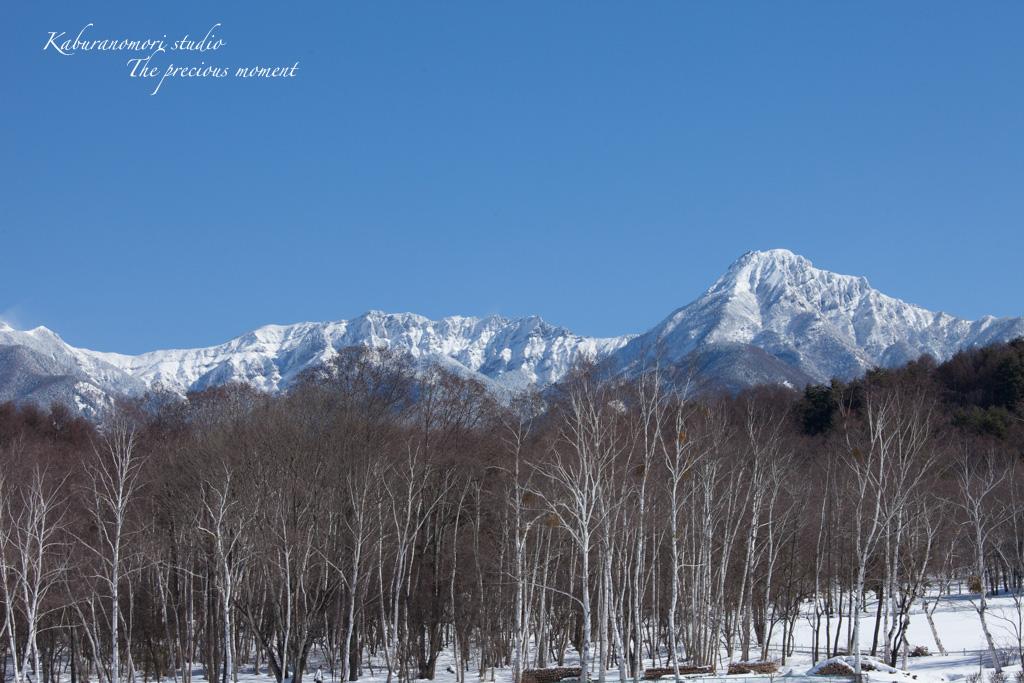 冬の八ヶ岳と白樺林_c0137403_1722875.jpg