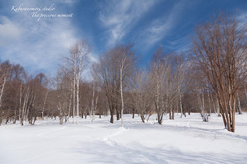 冬の八ヶ岳と白樺林_c0137403_17234729.jpg