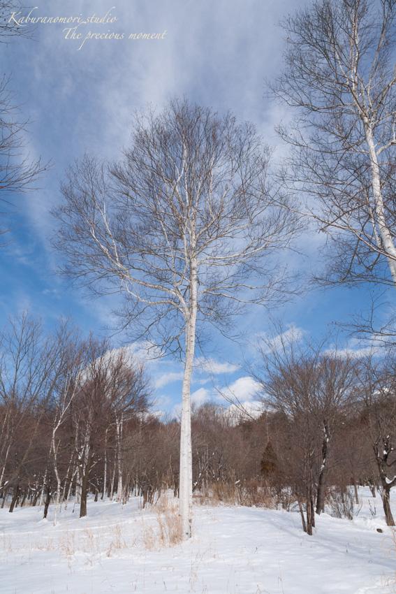 冬の八ヶ岳と白樺林_c0137403_17254930.jpg