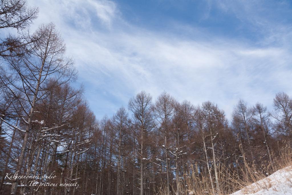 冬の八ヶ岳と白樺林_c0137403_1726598.jpg