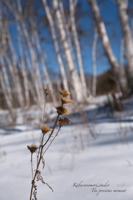 冬の八ヶ岳と白樺林_c0137403_17271243.jpg