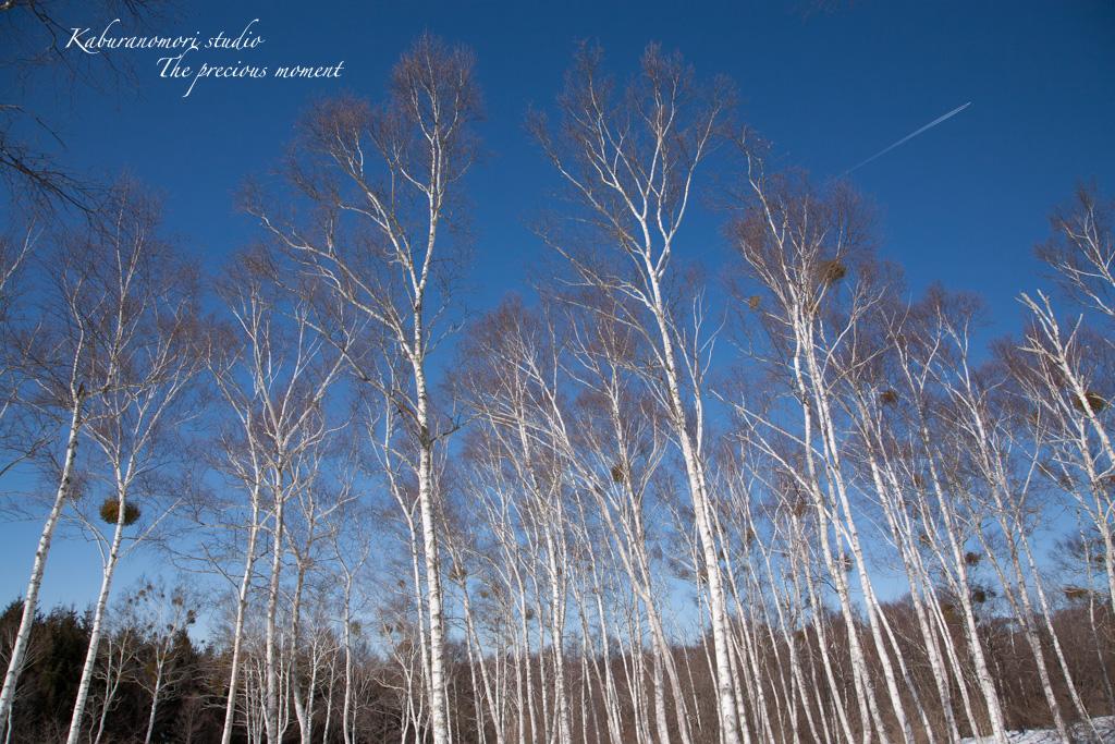 冬の八ヶ岳と白樺林_c0137403_17273287.jpg