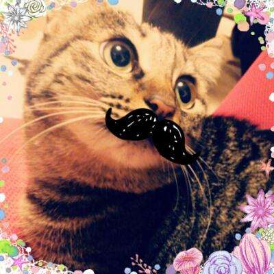 髭うみにゃん。_a0139911_20503489.jpg