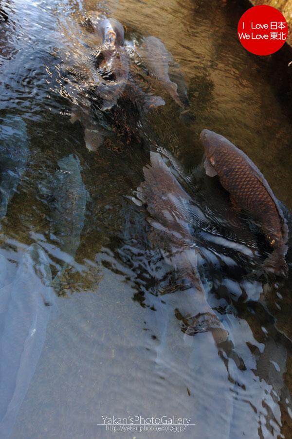 郡上八幡写真撮影記04 鯉のぼり寒ざらし うなぎの魚寅さん食事編_b0157849_0111629.jpg